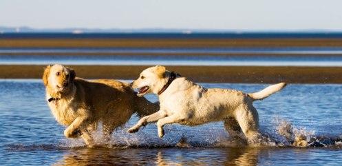dog-love-4